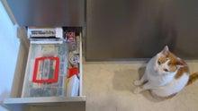 ライフオーガナイザー的 世界で一番帰りたくなる家   「自分ブランド」を作るお部屋作り-DSC_3078.JPG