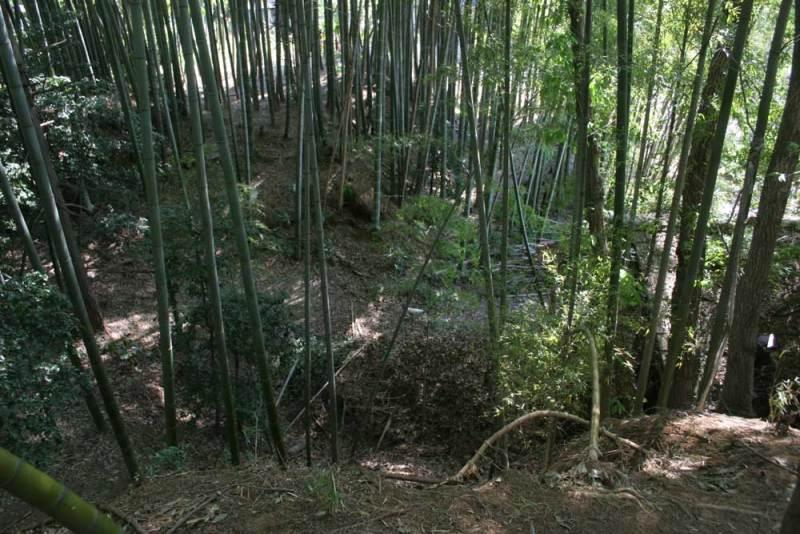 今井城/主郭から見た北東の大堀切