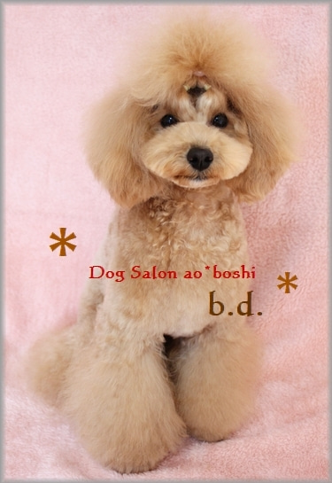 Dog Salon ao*boshi