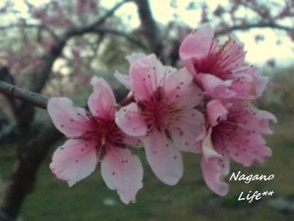 Nagano Life**-花