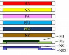 科学は面白い-A型インフルエンザウィルスの遺伝子