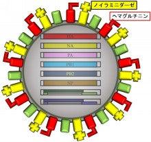 科学は面白い-A型インフルエンザウィルスの表面