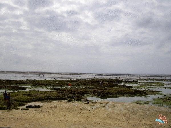 (足跡の足跡)めんたる系-もずくが取れる海岸