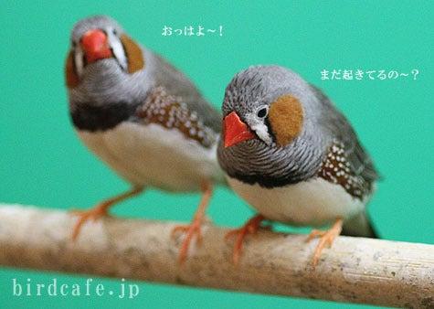 ようこそ!とりみカフェ!!~鳥カフェでの出来事や鳥写真~-朝イチキンカ♪