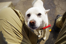 $DOG ID スタンドバイユゥ --- ひととわんこをつなぐプロジェクト
