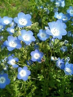 ご機嫌ダヤンくん☆ -Dayan in a good mood at anytime.--青い花