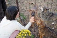 ペットのための自然療法~癒しを必要とするどうぶつ達へ