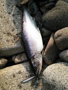 日本海に浮かぶ小さな島の釣りブログ