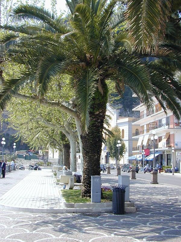 【彼女の恋した南イタリア】 - diario  イタリアリゾート最新情報    -マイオーリの顔、ビーチの棕櫚並木が・・