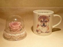 $柴犬好き❤たぁ~ママのブログ