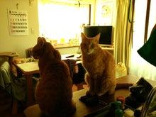 $sallie day go go!!-10年ぶりに再会した猫さんたち