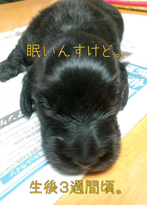 ダックス~おしゃべりなしっぽ-1368171145023.png
