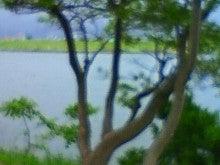 $酒とホラの日々。-雨の川辺