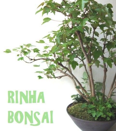 bonsai life      -盆栽のある暮らし- 東京の盆栽教室 琳葉(りんは)盆栽 RINHA BONSAI-カエデ楓モダン盆栽 琳葉盆栽