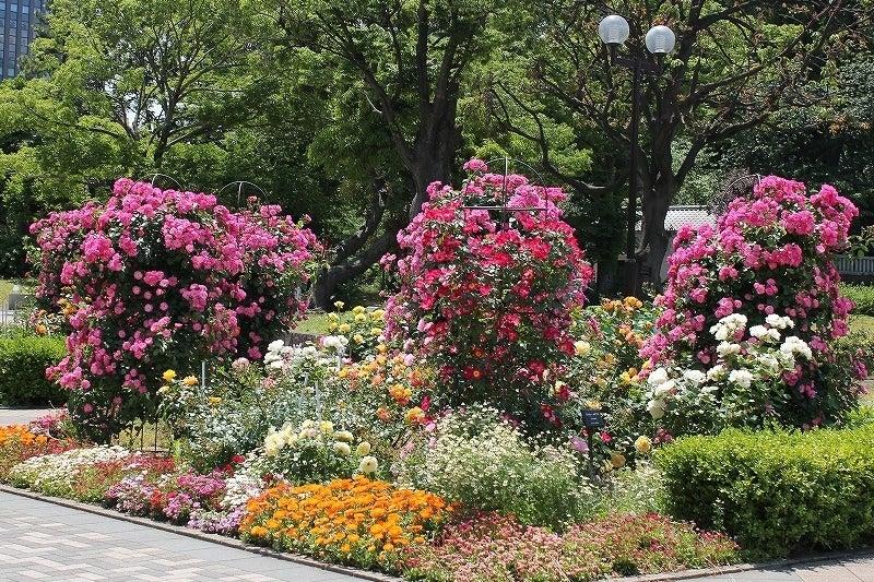特選街情報 NX-Station Blog-芝公園のバラ