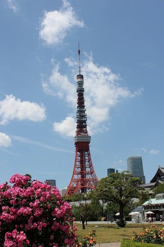 特選街情報 NX-Station Blog-芝公園の薔薇と東京タワー