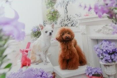 川崎の小型犬専門LUXEサロン kukuru
