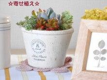 天然酵母の台所 koroぱん 雑貨ブログ-image