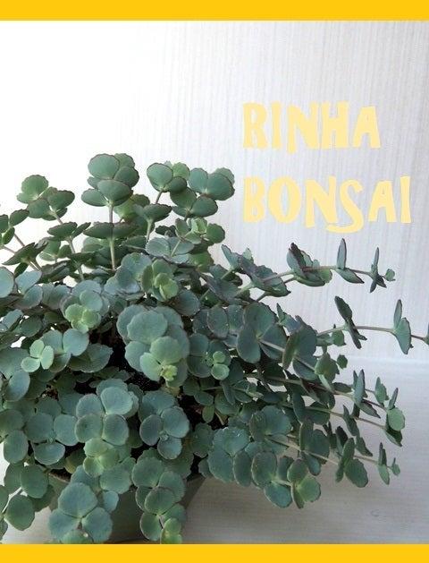 bonsai life      -盆栽のある暮らし- 東京の盆栽教室 琳葉(りんは)盆栽 RINHA BONSAI-琳葉盆栽 ミセバヤ