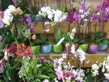 $ライフオーガナイザー的 世界で一番帰りたくなる家   「自分ブランド」を作るお部屋作り-flowers