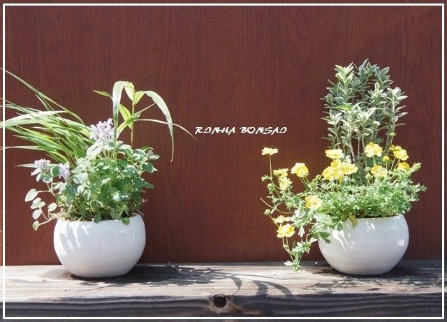 bonsai life      -盆栽のある暮らし- 東京の盆栽教室 琳葉(りんは)盆栽 RINHA BONSAI-琳葉盆栽 モダン 教室