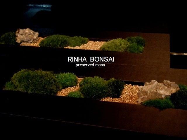 bonsai life      -盆栽のある暮らし- 東京の盆栽教室 琳葉(りんは)盆栽 RINHA BONSAI-琳葉盆栽 RINHA プリザーブド苔庭