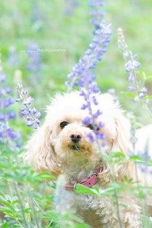 $Pink Puppy mimi