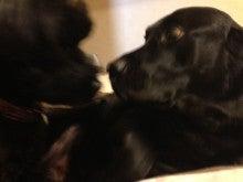 我が家のわんこは『菓子折り犬』
