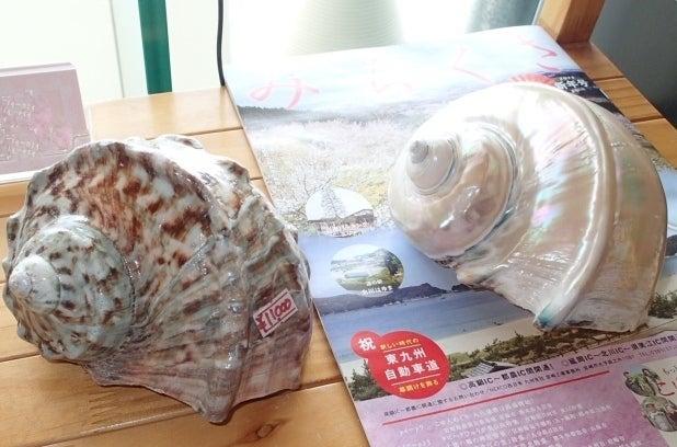 歩き人ふみの徒歩世界旅行 日本・台湾編-夜光貝の貝殻