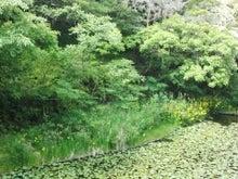 かみちゃんのブログ-IMG_20130517_142825.jpg