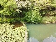 かみちゃんのブログ-IMG_20130517_142924.jpg