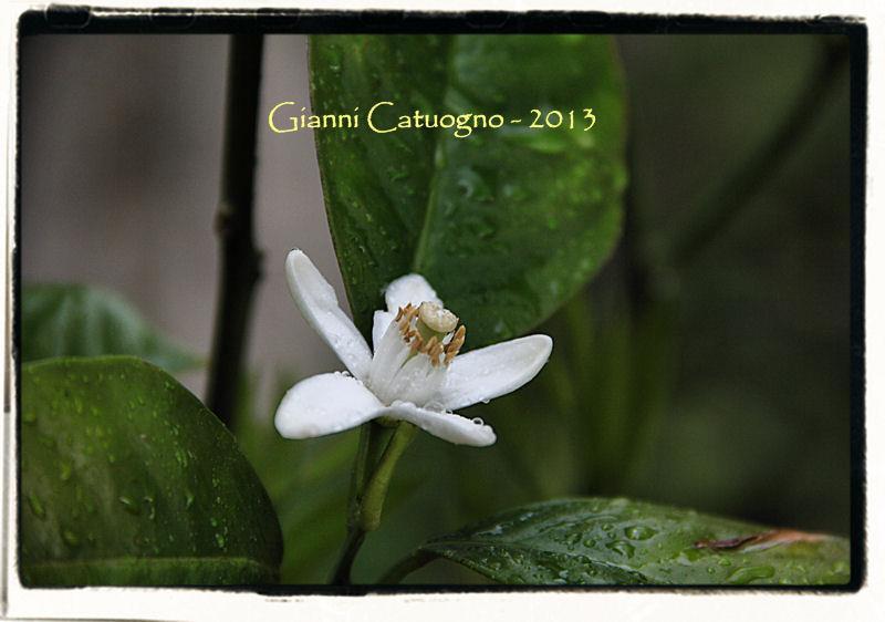 【彼女の恋した南イタリア】 - diario  イタリアリゾート最新情報    -カプリの小さな花 Foto by Gianni