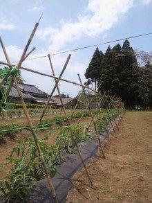 直売所「夢市場」の直営農場ブログ~いちファーマーの挑戦~-DCIM0424.jpg