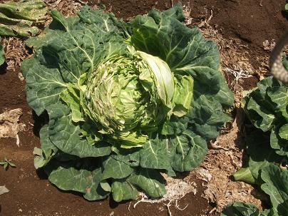 農業トータルコーディネーター イノウエ農商事のブログ-05182