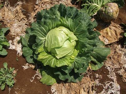 農業トータルコーディネーター イノウエ農商事のブログ-05183