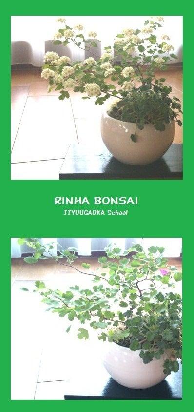 bonsai life      -盆栽のある暮らし- 東京の盆栽教室 琳葉(りんは)盆栽 RINHA BONSAI-琳葉盆栽 ミツデイワガサ 姫フウロ モダン