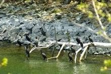 10川鵜の昼休み