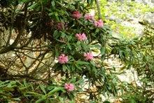 06石楠花