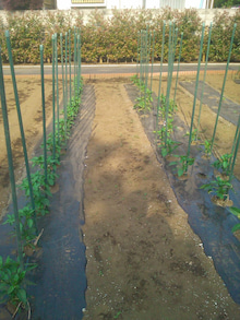 東京都武蔵村山市で農業始めます。<福笑い農場のブログ>