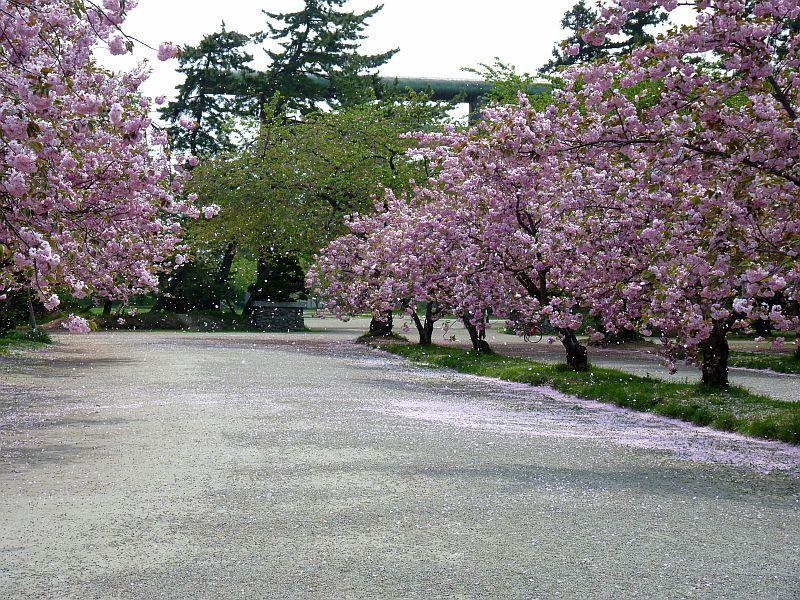 津軽徒然-弘前公園20130522