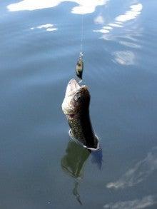 釣れるといいな