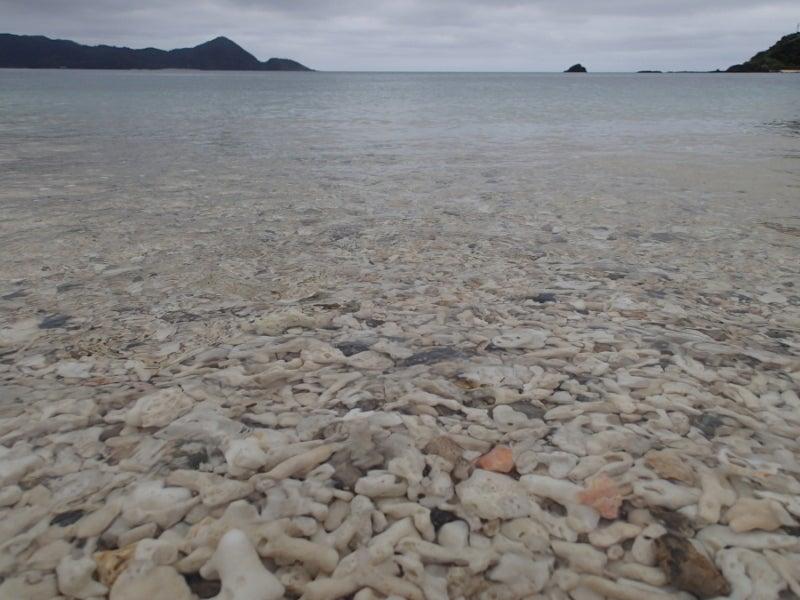 歩き人ふみの徒歩世界旅行 日本・台湾編-珊瑚の浜1
