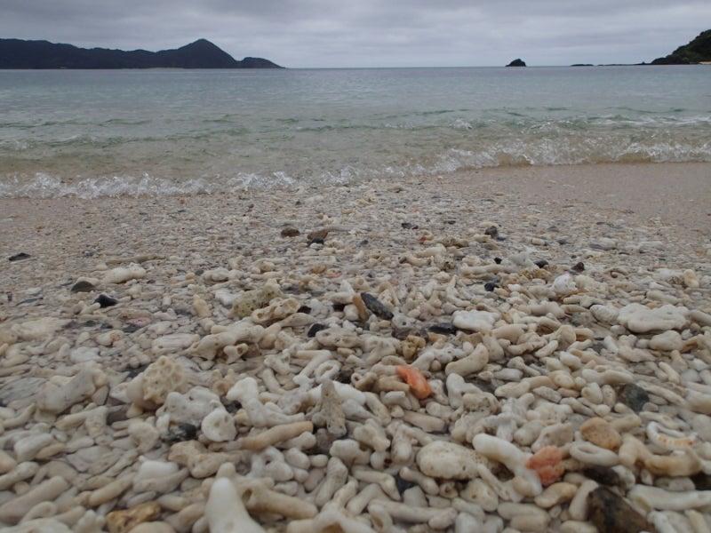 歩き人ふみの徒歩世界旅行 日本・台湾編-珊瑚の浜2