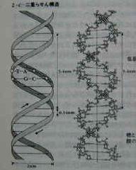 $札幌南区/願いを叶える生命の樹-DNA構造