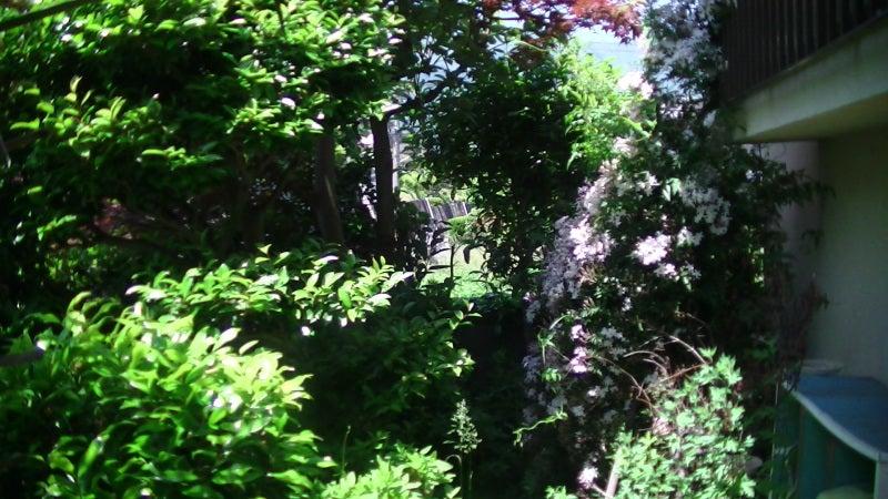 おまけ道@琵琶湖畔で実家生活♪ポテチンっ♪-20130524fri