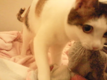 PFL★MIKIのブログ-2013052320570000.jpg