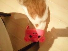 PFL★MIKIのブログ-2013050622120000.jpg