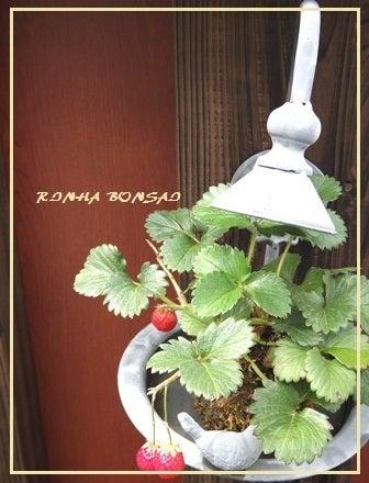 bonsai life      -盆栽のある暮らし- 東京の盆栽教室 琳葉(りんは)盆栽 RINHA BONSAI-いちご苔玉 琳葉盆栽 モダン