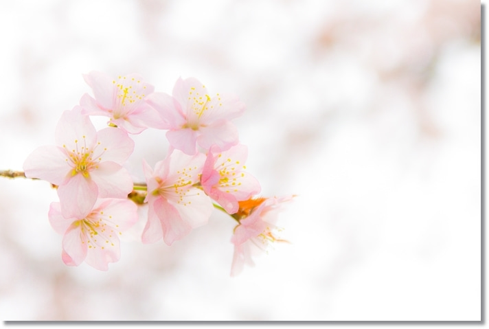 シフォン&こむぎの写真ブログ