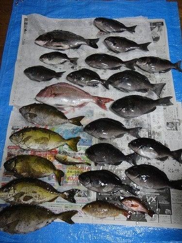 ぴろきちのブログ(福岡)-魚祭り